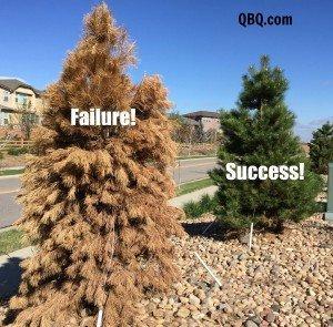 tree success-failure